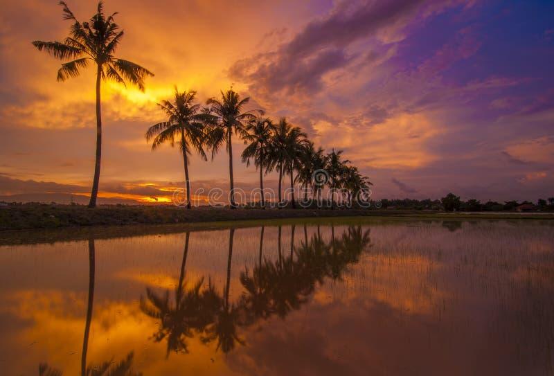 Ηλιοβασίλεμα καψίματος με την αντανάκλαση του τροπικού δέντρου στοκ φωτογραφία
