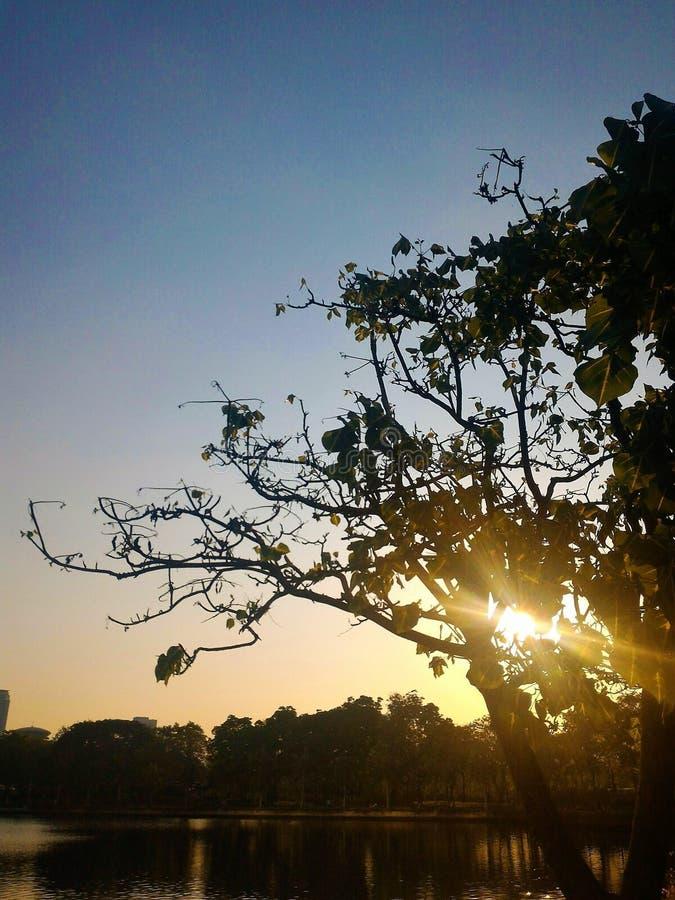Ηλιοβασίλεμα μέσω του δέντρου στοκ εικόνα με δικαίωμα ελεύθερης χρήσης