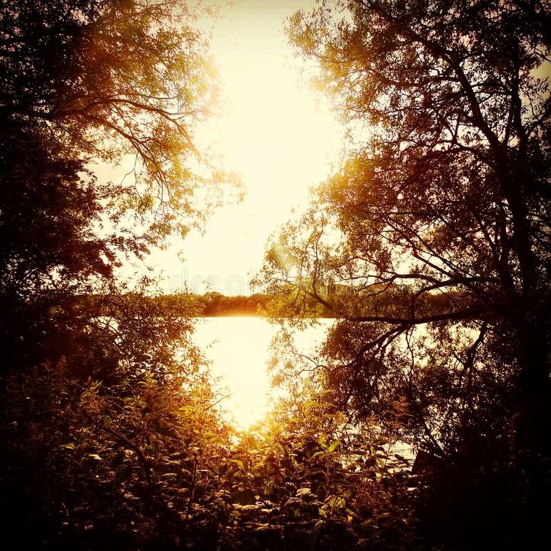 Ηλιοβασίλεμα μέσω των δέντρων στοκ φωτογραφία