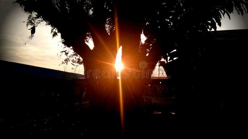 ηλιοβασίλεμα μεταξύ του δέντρου στοκ εικόνα με δικαίωμα ελεύθερης χρήσης