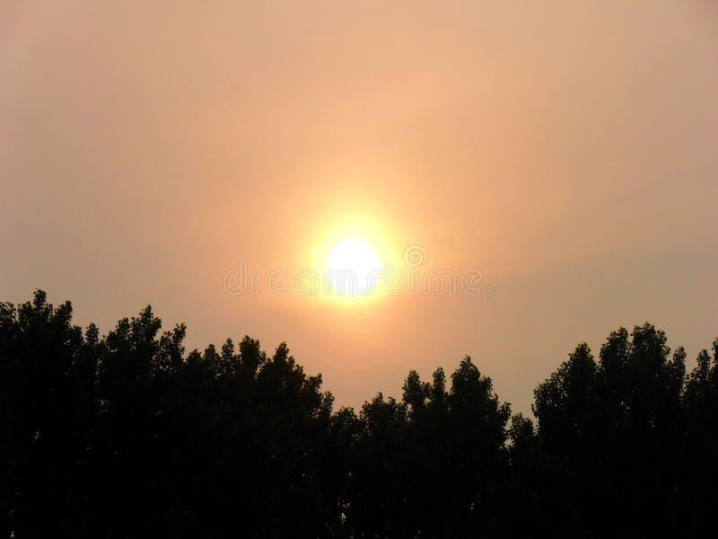 Ηλιοβασίλεμα με τη δασική σκιαγραφία στοκ φωτογραφία με δικαίωμα ελεύθερης χρήσης