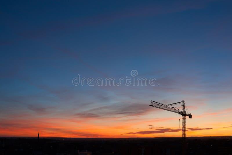 Ηλιοβασίλεμα με τους άσπρους πελαργούς στοκ εικόνα