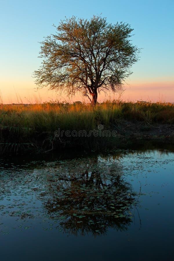 Ηλιοβασίλεμα με το δέντρο και την αντανάκλαση στοκ φωτογραφία με δικαίωμα ελεύθερης χρήσης