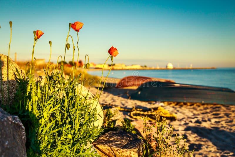 ηλιοβασίλεμα λουλουδιών στοκ εικόνες