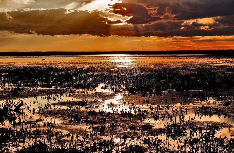 Ηλιοβασίλεμα πέρα από τα καλλιεργημένα κρεβάτια καλάμων του Camargue στοκ φωτογραφίες με δικαίωμα ελεύθερης χρήσης