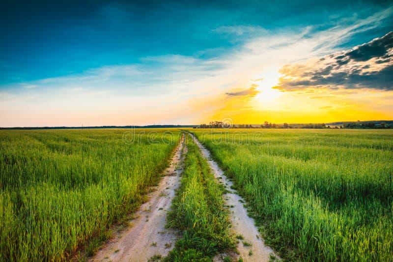 Ηλιοβασίλεμα πέρα από τον αγροτικό δρόμο στον πράσινο τομέα στοκ φωτογραφία με δικαίωμα ελεύθερης χρήσης