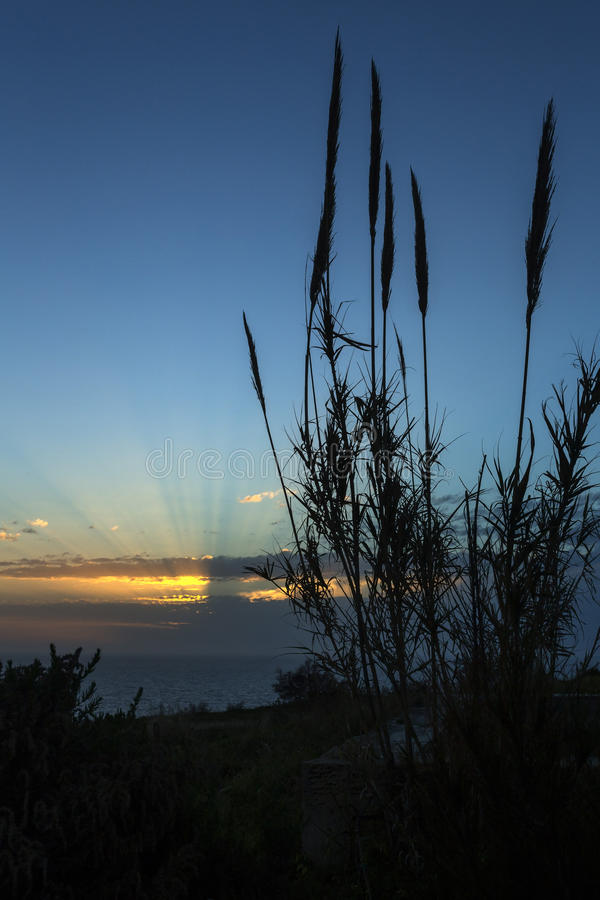 Ηλιοβασίλεμα πέρα από τους βλαστούς μπαμπού στοκ φωτογραφία με δικαίωμα ελεύθερης χρήσης