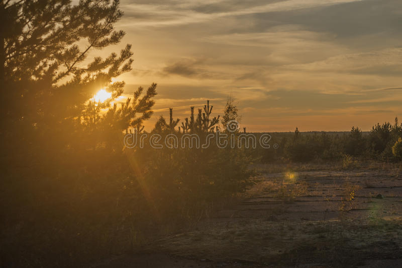 Ηλιοβασίλεμα πέρα από το δάσος στοκ φωτογραφία