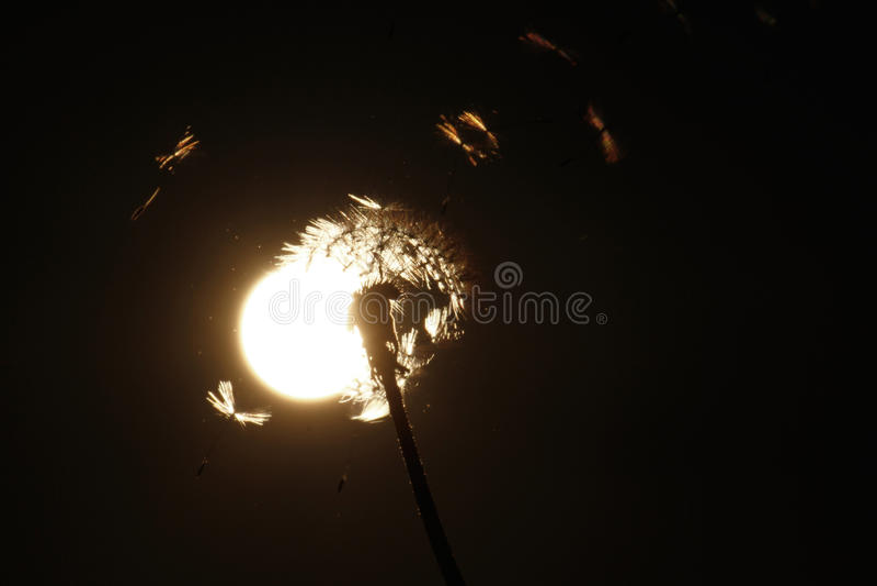 ηλιοβασίλεμα πικραλίδω στοκ φωτογραφία
