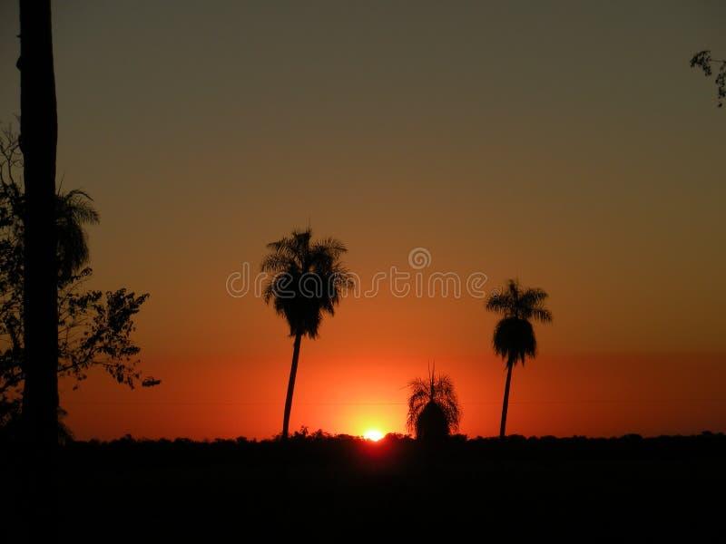 Ηλιοβασίλεμα σε Pantanal στοκ φωτογραφία με δικαίωμα ελεύθερης χρήσης