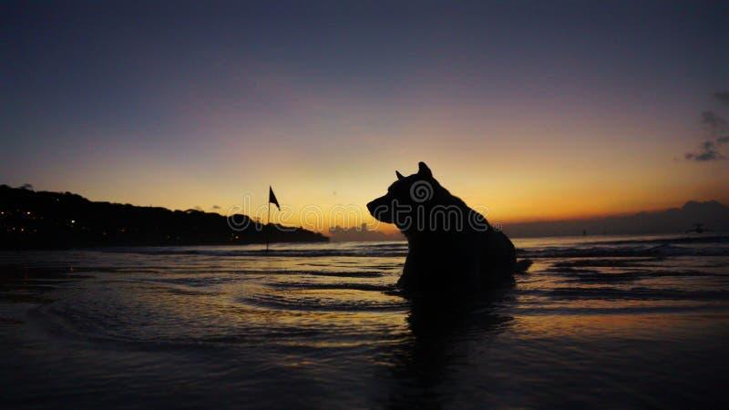ηλιοβασίλεμα σκυλιών στοκ φωτογραφία με δικαίωμα ελεύθερης χρήσης