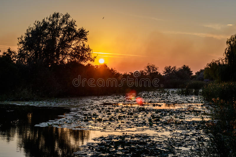 Ηλιοβασίλεμα στη λίμνη με τους κρίνους νερού και με τα δέντρα στο υπόβαθρο στοκ φωτογραφίες με δικαίωμα ελεύθερης χρήσης