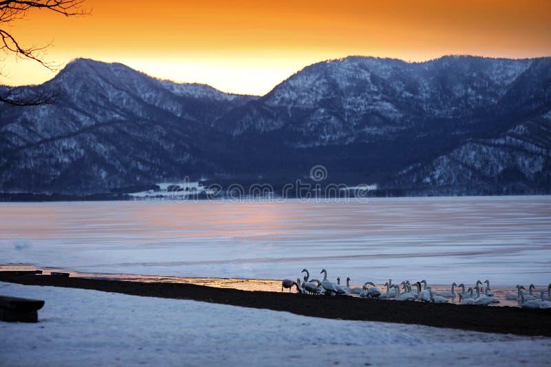 Ηλιοβασίλεμα στη λίμνη πάγου στο Hokkaido της Ιαπωνίας στοκ εικόνα με δικαίωμα ελεύθερης χρήσης