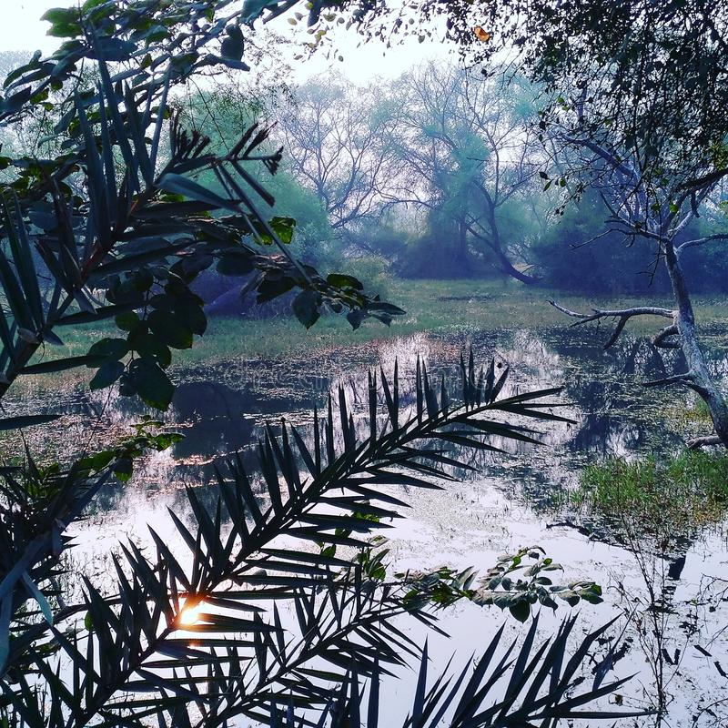 Ηλιοβασίλεμα στη ζούγκλα στοκ φωτογραφία