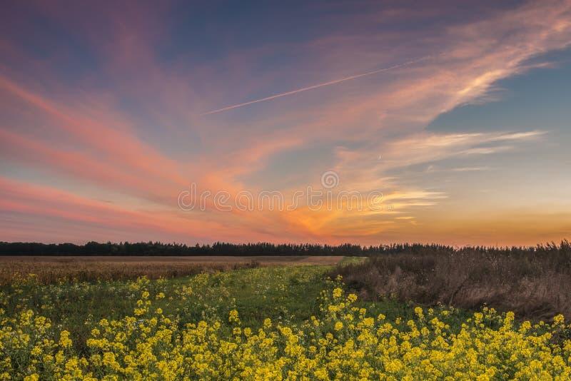 Ηλιοβασίλεμα στον τομέα φθινοπώρου στοκ φωτογραφία με δικαίωμα ελεύθερης χρήσης