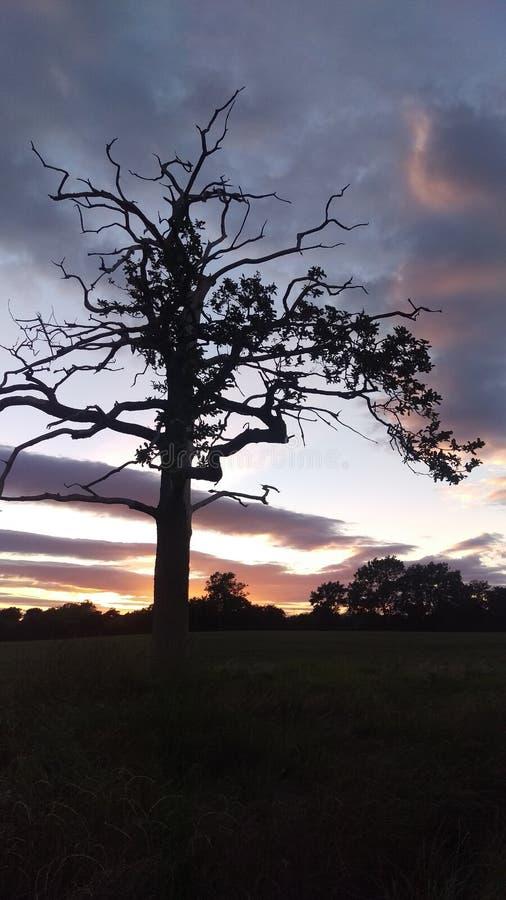 Ηλιοβασίλεμα στους ουρανούς του Γιορκσάιρ στοκ φωτογραφίες με δικαίωμα ελεύθερης χρήσης