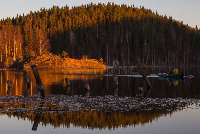 Ηλιοβασίλεμα στο δάσος στοκ εικόνα με δικαίωμα ελεύθερης χρήσης