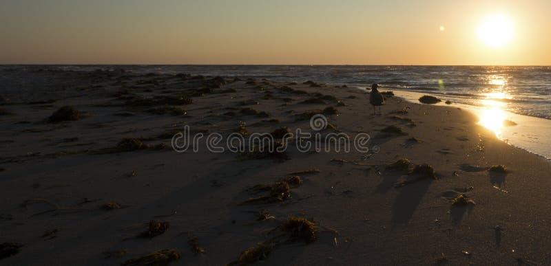 Ηλιοβασίλεμα στο βακαλάο ακρωτηρίων στοκ εικόνες