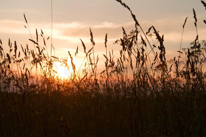 Ηλιοβασίλεμα στο λιβάδι στη νύχτα θερινού ηλιοστάσιου στοκ εικόνες