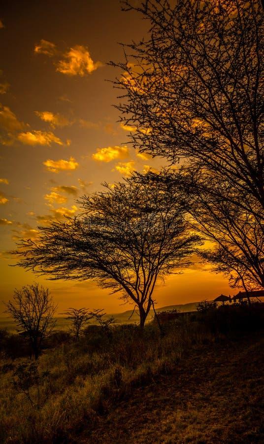 Ηλιοβασίλεμα στο Serengeti στοκ φωτογραφίες