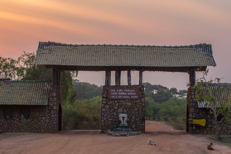 Ηλιοβασίλεμα στο Yala Nationalpark στοκ φωτογραφία