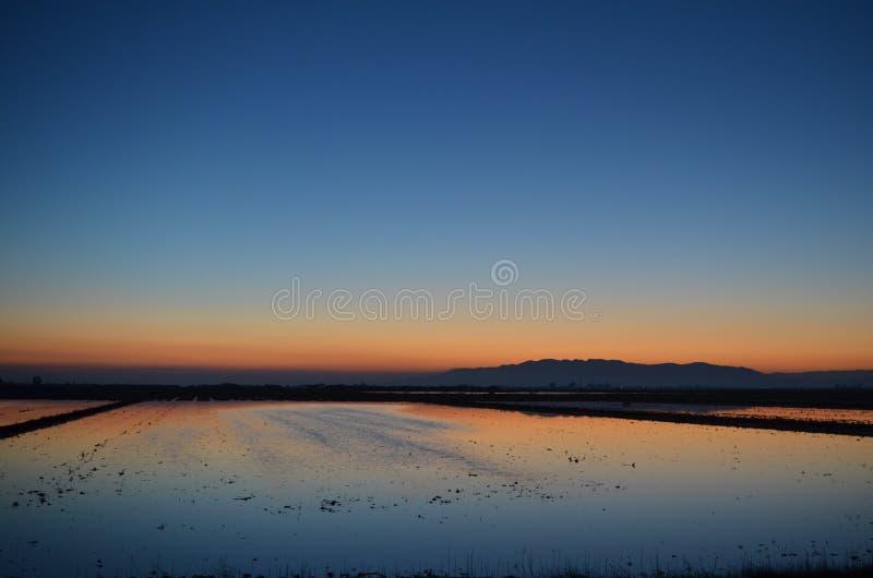 Ηλιοβασίλεμα τομέων ρυζιού στοκ εικόνα με δικαίωμα ελεύθερης χρήσης