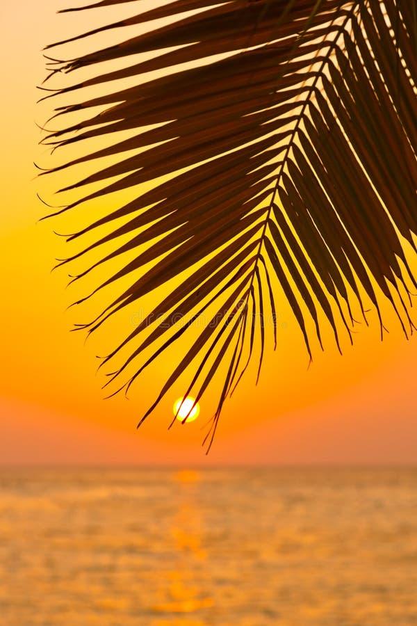 ηλιοβασίλεμα φοινικών φύλλων στοκ εικόνα