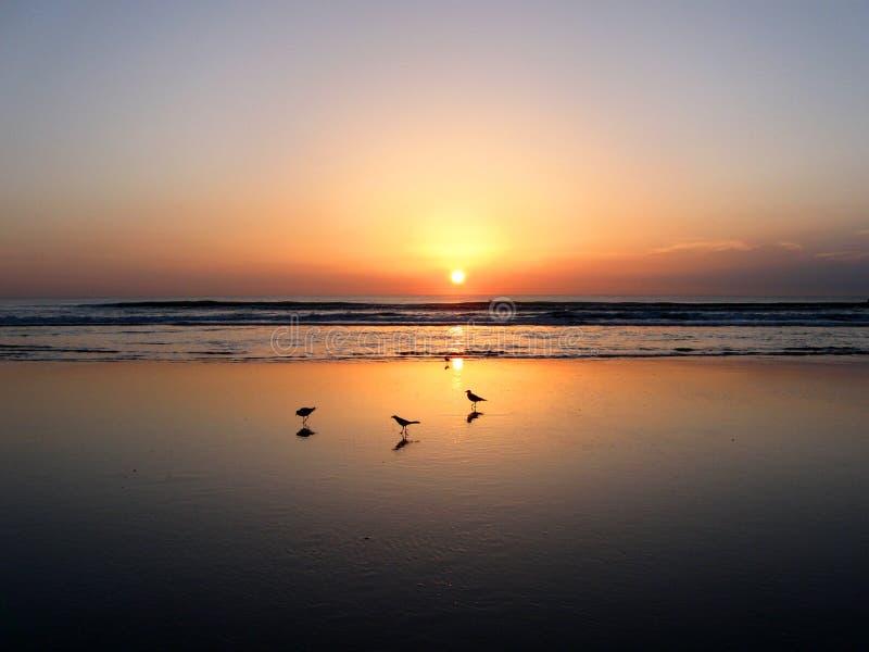Ηλιοβασίλεμα Daytona Beach στοκ εικόνα με δικαίωμα ελεύθερης χρήσης