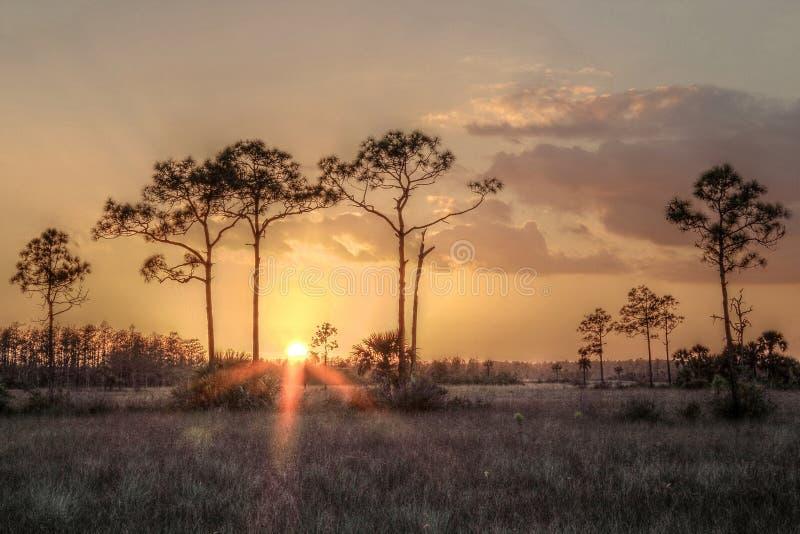 Ηλιοβασίλεμα Everglades στοκ φωτογραφία