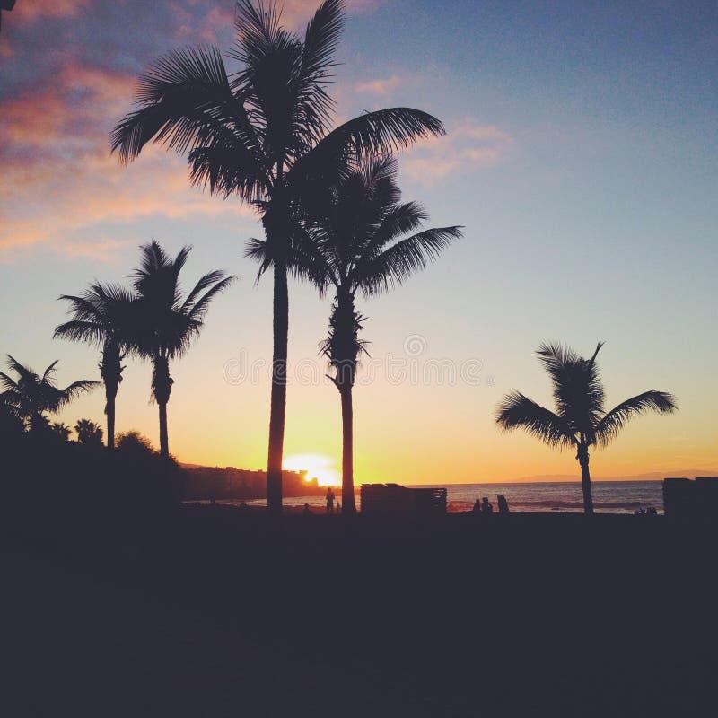 Ηλιοβασίλεμα Palmtree στοκ φωτογραφίες με δικαίωμα ελεύθερης χρήσης