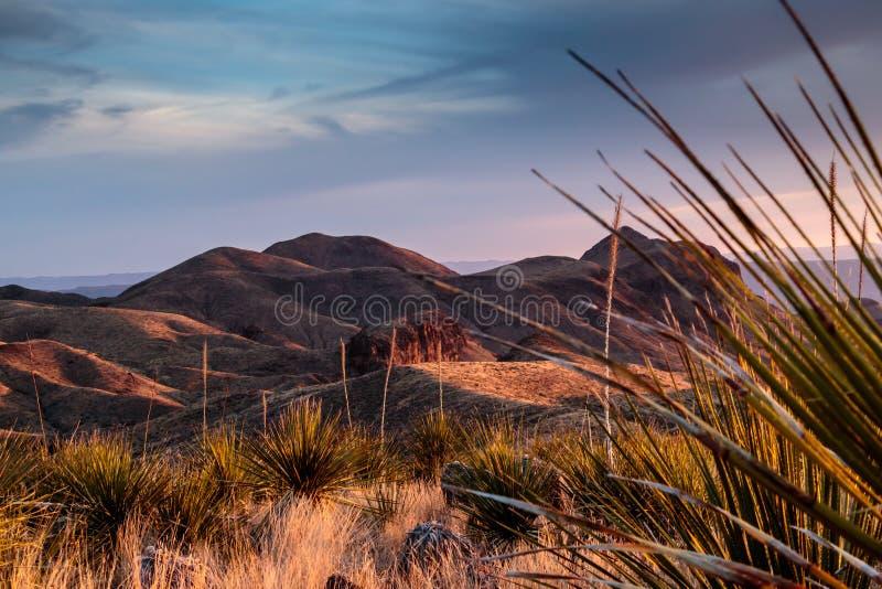 Ηλιοβασίλεμα Vista Sotol βουνών Chisos στοκ φωτογραφία με δικαίωμα ελεύθερης χρήσης