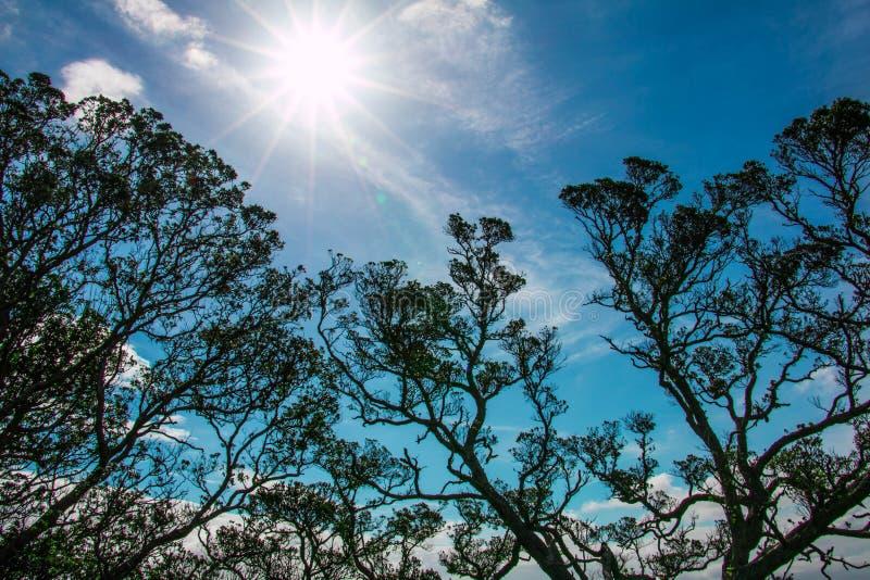 Ηλιοφάνεια πέρα από την κορυφή δέντρων στοκ φωτογραφία