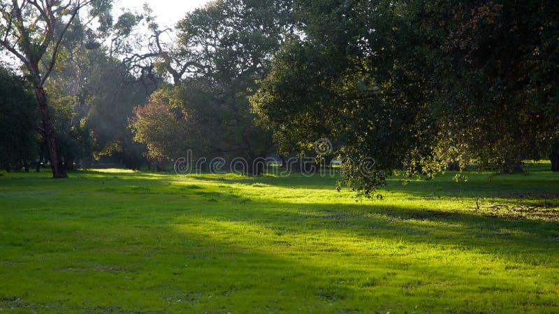 Ηλιοφάνεια στο πράσινο έδαφος σε ένα πάρκο στοκ εικόνες