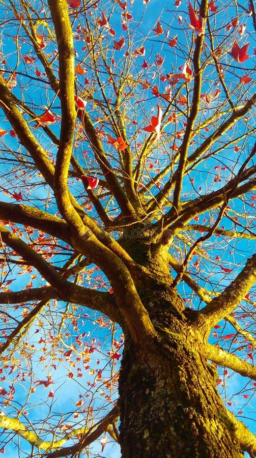 Ηλιοφώτιστη πτώση στοκ φωτογραφία με δικαίωμα ελεύθερης χρήσης