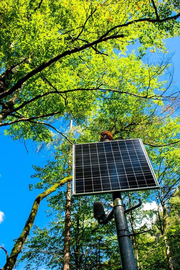 Ηλιοφώτιστο ηλιακό πλαίσιο στο δάσος στοκ εικόνες με δικαίωμα ελεύθερης χρήσης