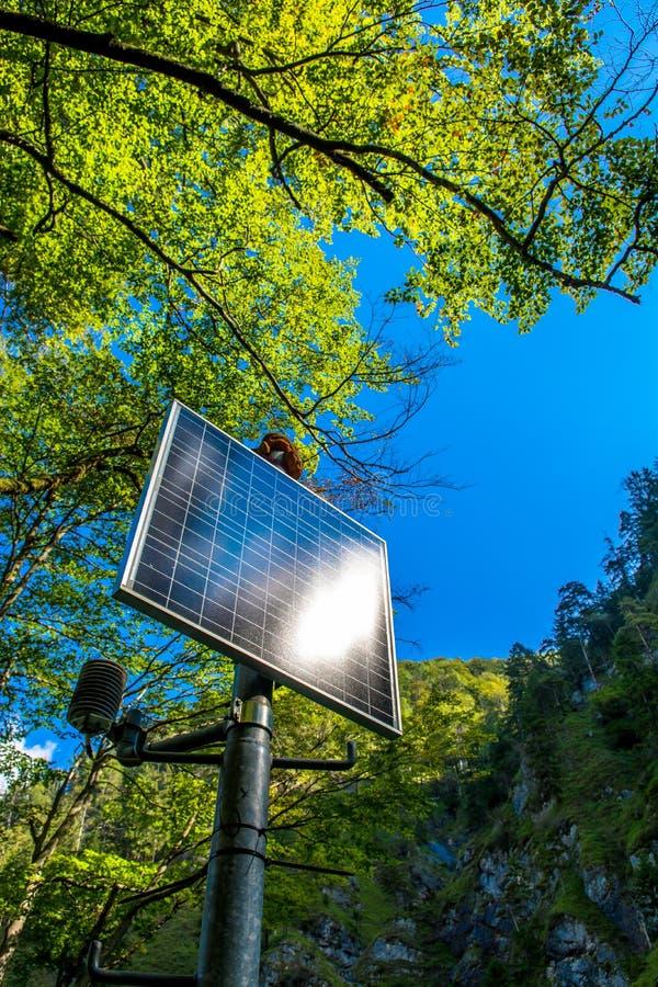Ηλιοφώτιστο ηλιακό πλαίσιο στο δάσος στοκ φωτογραφία με δικαίωμα ελεύθερης χρήσης