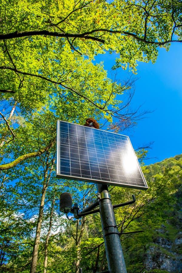 Ηλιοφώτιστο ηλιακό πλαίσιο στο δάσος στοκ εικόνα