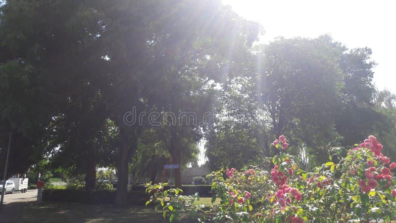 Ηλιόλουστα δέντρα στο πάρκο στοκ εικόνα