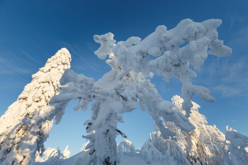 Ηλιόλουστη ημέρα στα χειμερινά δασικά, ural βουνά, χειμερινό δασικό, ρωσικό natu στοκ εικόνες