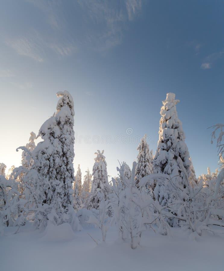 Ηλιόλουστη ημέρα στα χειμερινά δασικά, ural βουνά, χειμερινό δασικό, ρωσικό natu στοκ φωτογραφία με δικαίωμα ελεύθερης χρήσης