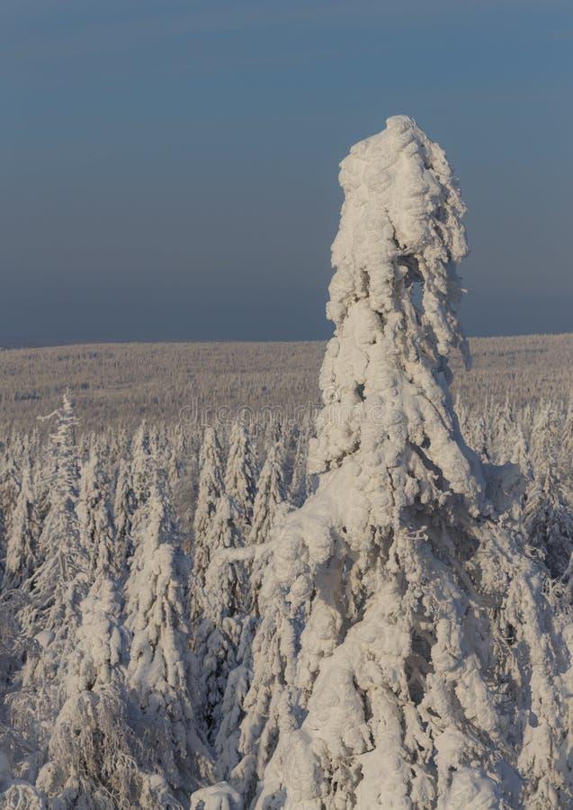 Ηλιόλουστη ημέρα στα χειμερινά δασικά, ural βουνά, χειμερινό δασικό, ρωσικό natu στοκ φωτογραφίες