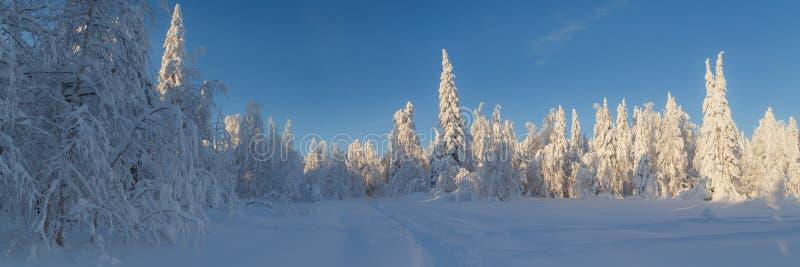 Ηλιόλουστη ημέρα στα χειμερινά δασικά, ural βουνά, χειμερινό δασικό, ρωσικό natu στοκ εικόνα με δικαίωμα ελεύθερης χρήσης