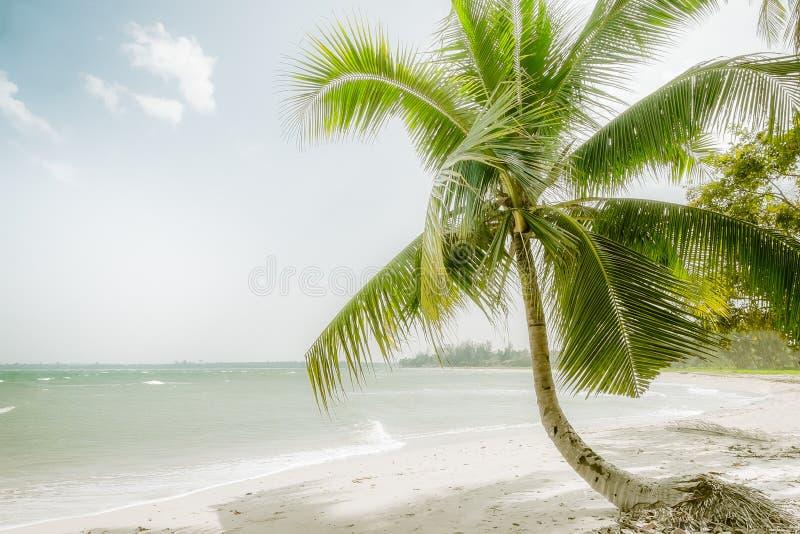 Ηλιόλουστη ημέρα στην καταπληκτική τροπική παραλία με το φοίνικα, την άσπρη άμμο και τα τυρκουάζ ωκεάνια κύματα Myanmar στοκ φωτογραφίες με δικαίωμα ελεύθερης χρήσης