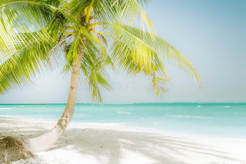 Ηλιόλουστη ημέρα στην καταπληκτική τροπική παραλία με το φοίνικα στοκ φωτογραφία με δικαίωμα ελεύθερης χρήσης