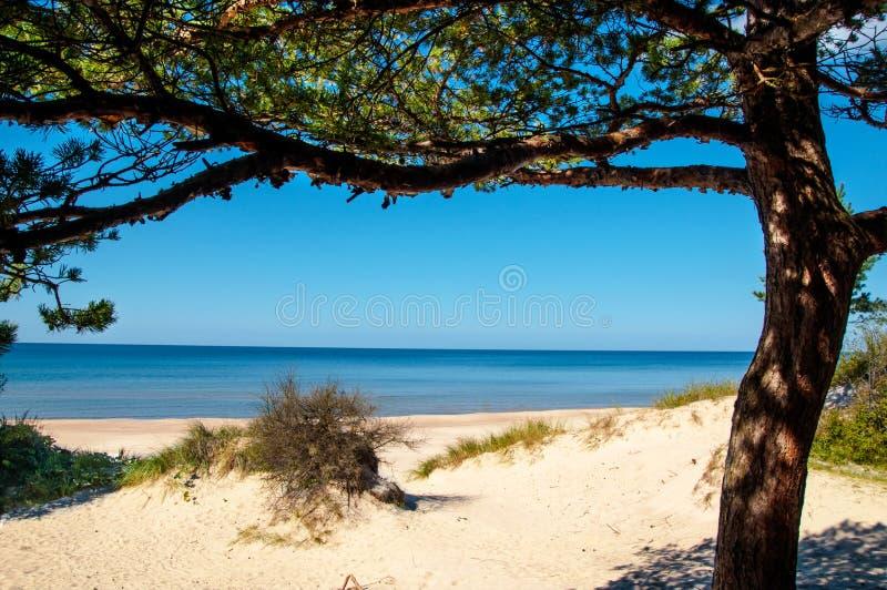 Ηλιόλουστη παραλία της θάλασσας της Βαλτικής στοκ εικόνες
