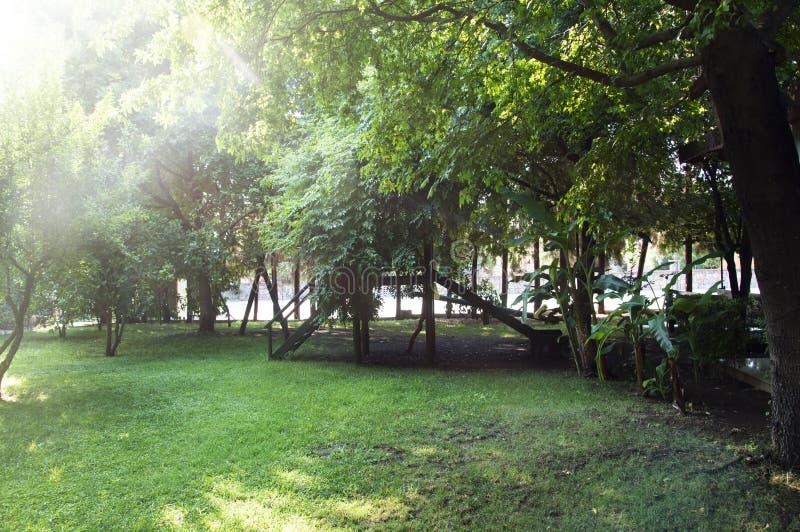 Ηλιόλουστος θερινός κήπος στοκ φωτογραφίες με δικαίωμα ελεύθερης χρήσης