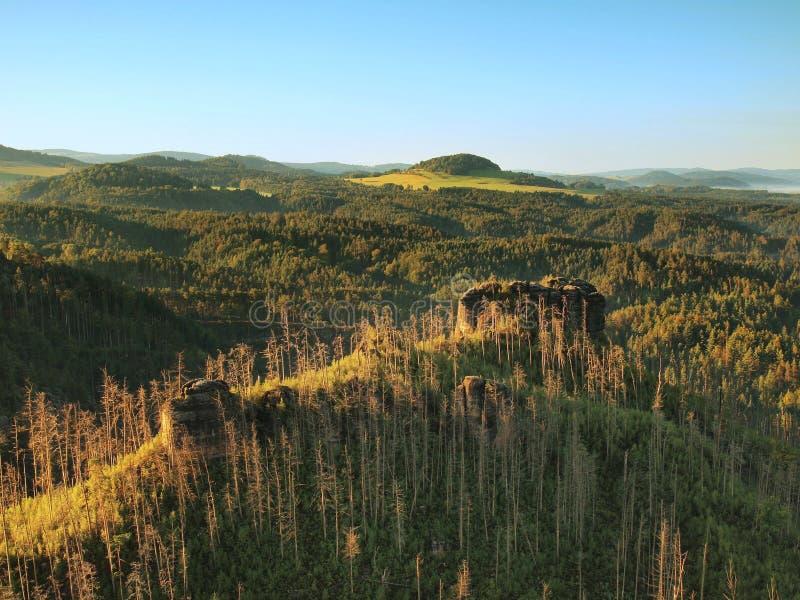 Ηλιόλουστο πρωί φθινοπώρου επάνω από το δάσος θανάτου στο δύσκολο λόφο Οι ξηροί κορμοί κολλούν επάνω στοκ φωτογραφία