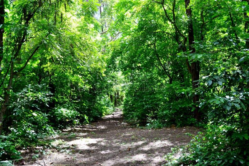 Ηλιόλουστο τροπικό δάσος στοκ εικόνα με δικαίωμα ελεύθερης χρήσης