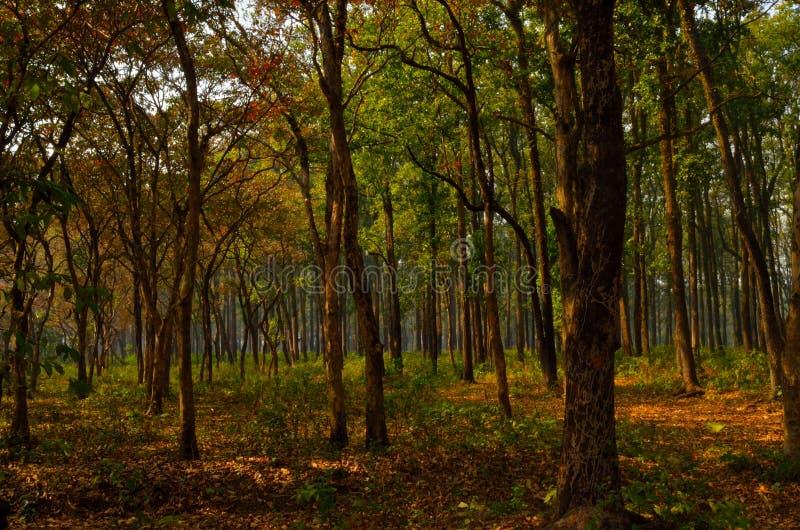 Ηλιόλουστο χειμερινό πρωί στο πυκνό δάσος στοκ εικόνες