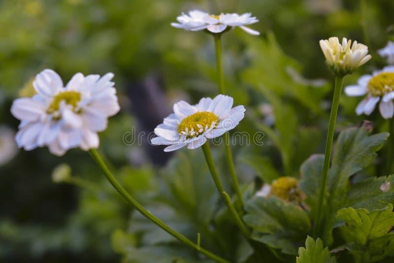 η κάρτα φθινοπώρου εύκολη επιμελείται τις διακοπές λουλουδιών τροποποιεί στο διάνυσμα στοκ εικόνα
